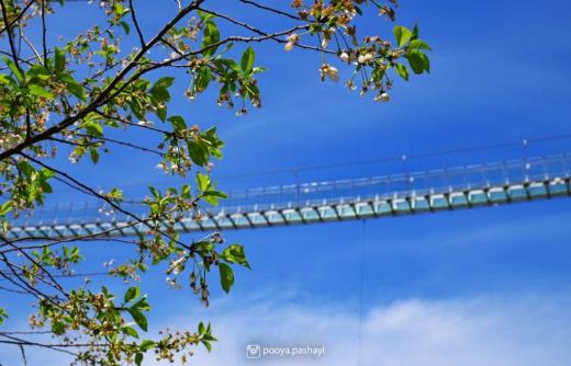 اولین پل تمام شیشه ای جهان/عکس