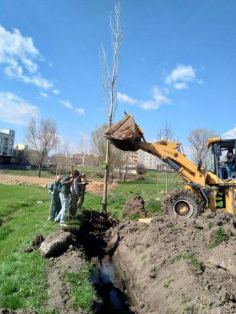 جابجایی درختان بجای قطع آنها در سرعین