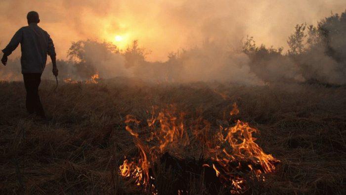 آتش زدن بقایای گیاهی پس از برداشت محصول ممنوع است