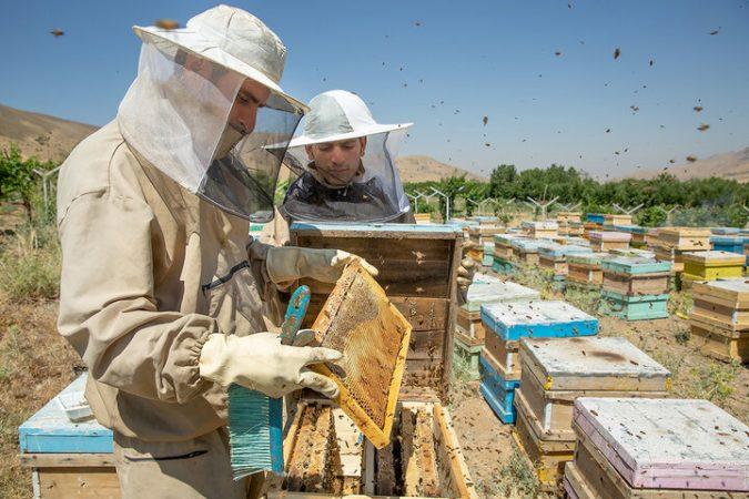 آموزش زیست محیطی زنبورداران در سرعین