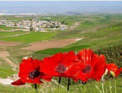 طبیعت چشم نواز روستای اوجور سرعین/عکس