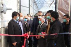افتتاح بزرگترین گلخانه گل رز در سرعین+عکس